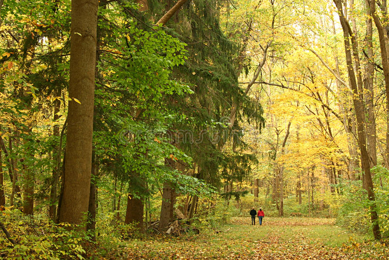 Walk Through An Autumn Forest Stock Photos