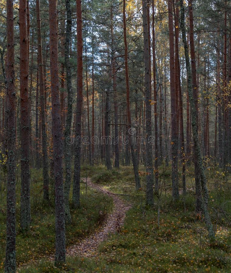 Walk in autumn forest stock photo