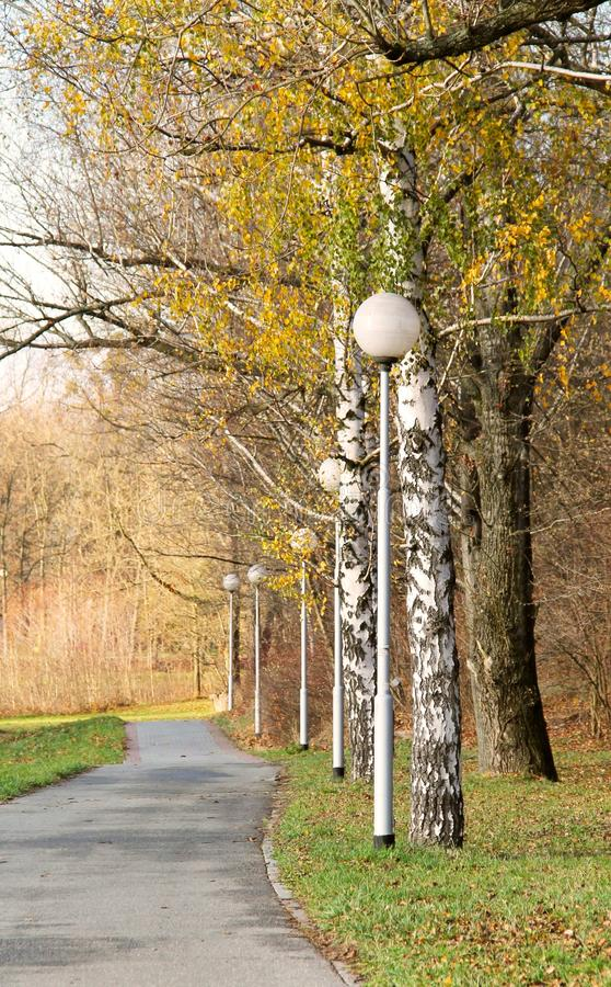 Walk in the autumn. Pavement in the avenue of trees with line of lamps in autumn royalty free stock photo