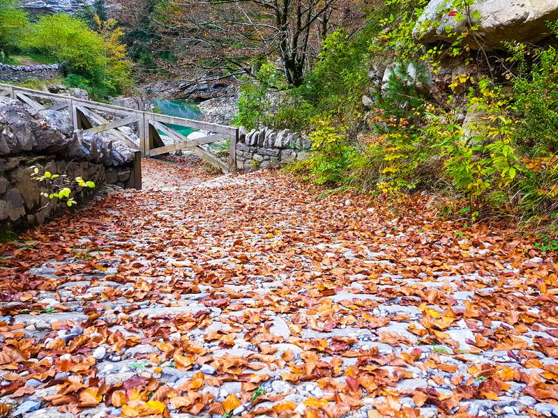 Walk on the autumn road forest in Ordesa y Monte Perdido National Park, Huesca. Spain stock photos