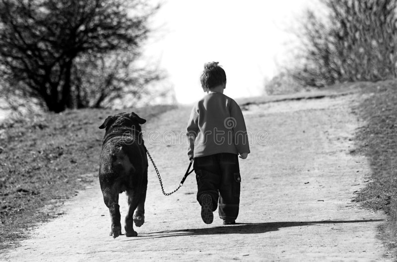 Walk with the dog stock photography