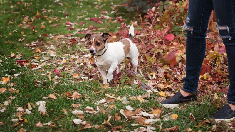 Walk the dog royalty free stock photos