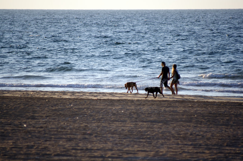 Walk with dogs. A walk along the sea with dogs royalty free stock photo