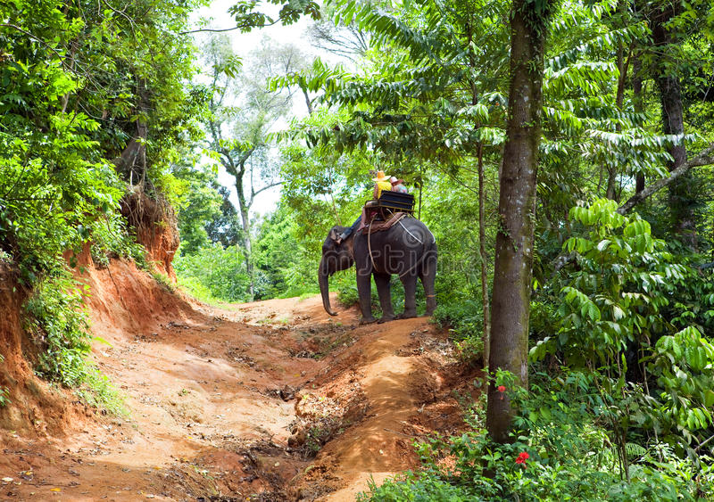 Walk on an elephant in jungle stock images