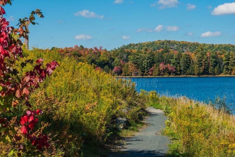 A Walk through Fall. September in Northern Ontario, Canada. Fall hits Elliot Lake royalty free stock image