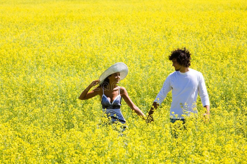Walk in the fields of gold stock photo