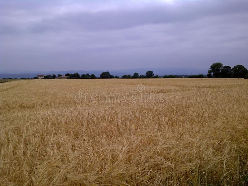 We walk in fields of gold. Watching blue sky and hearing silent in France. A cloud`s mountain is coming stock photos