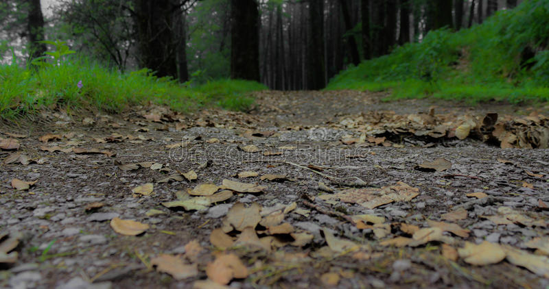 Walk through forest royalty free stock images
