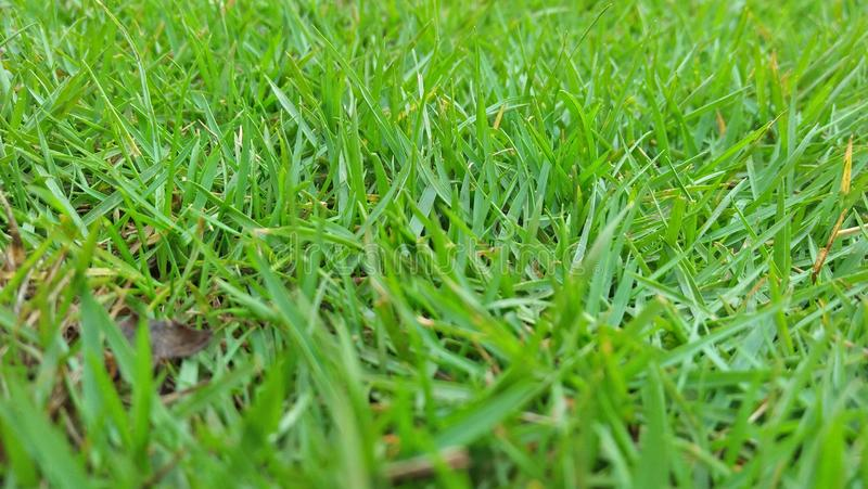 Walk on green grass royalty free stock images