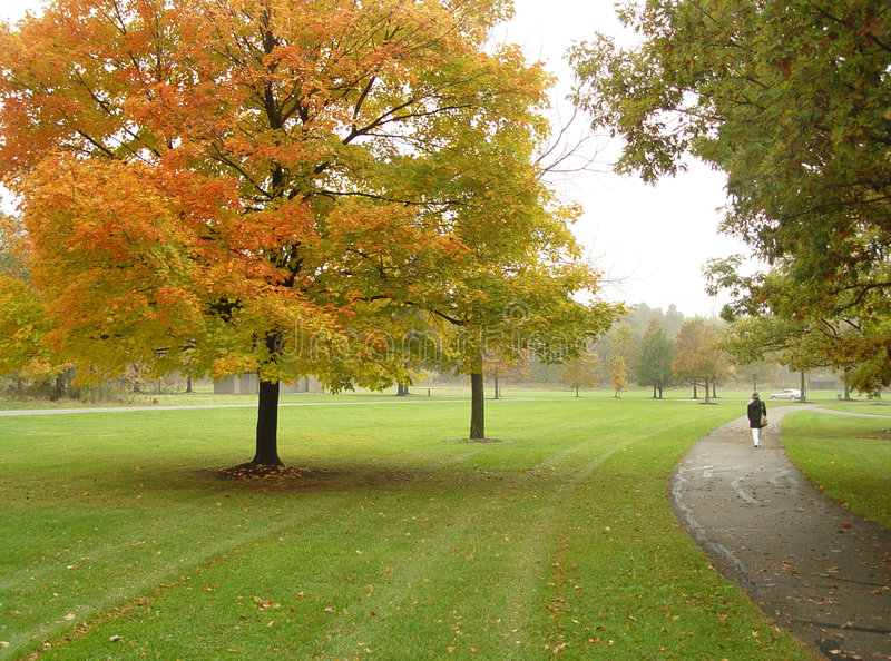 Download Walk in the park stock image. Image of season, color, sharon - 34343
