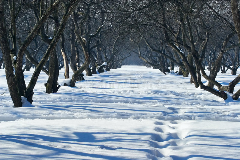 Download Walk In Park At A Clear Sunny Winter Day Stock Photo - Image of sunny, blue: 1798290