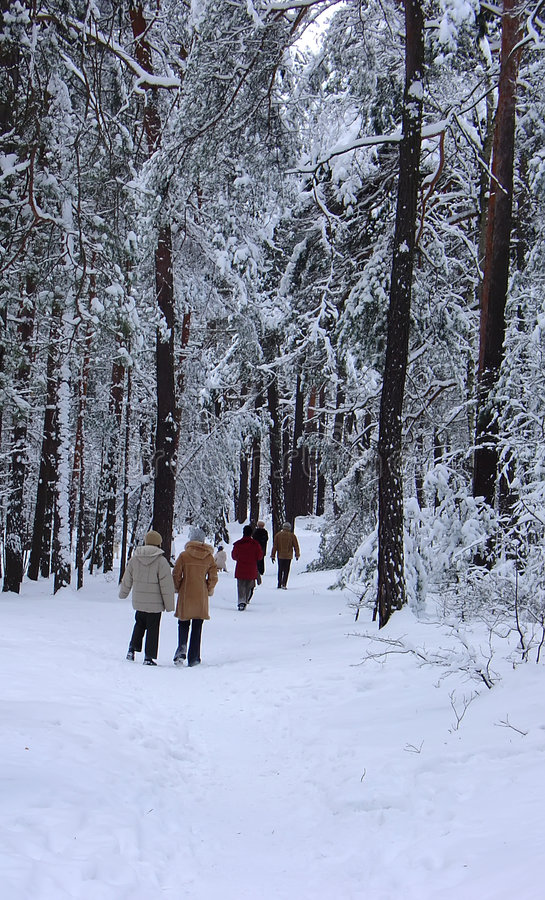 The walk in the park - winter stock image
