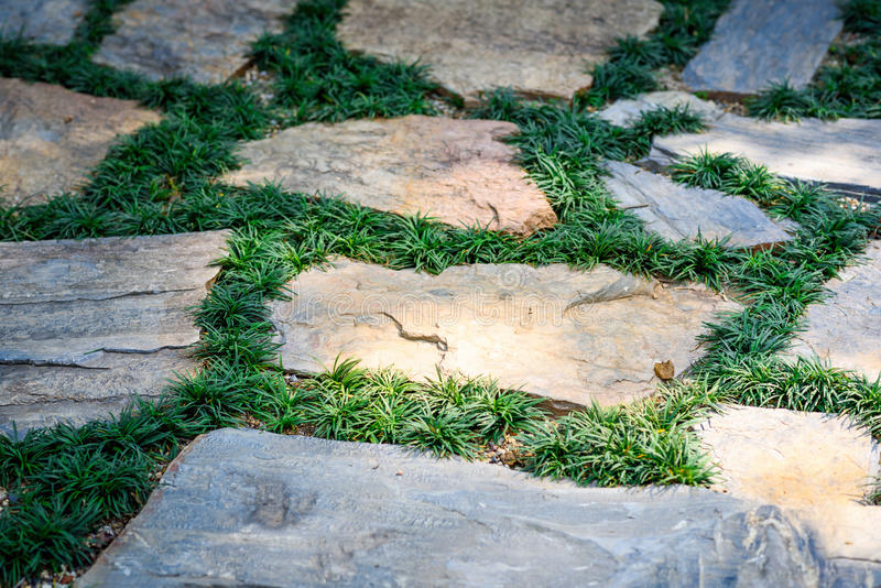 Walk path in the park. Relax block walk path in the park with green grass royalty free stock image