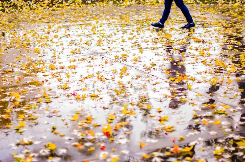 A walk in the rain. Autumnal walk in the rain royalty free stock photos