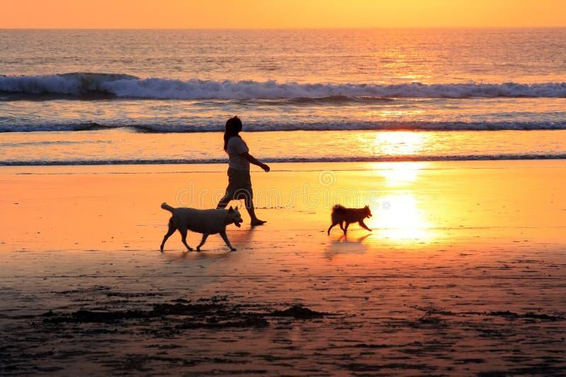 Walk on sunset royalty free stock photos