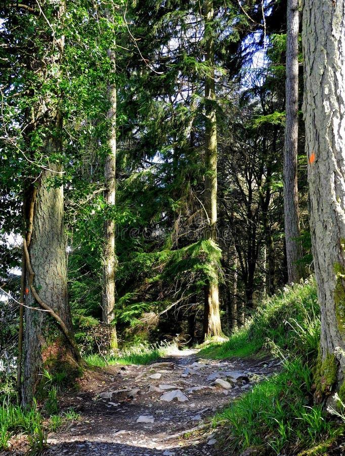 Free Walk Through The Woods. Stock Photos - 131652563