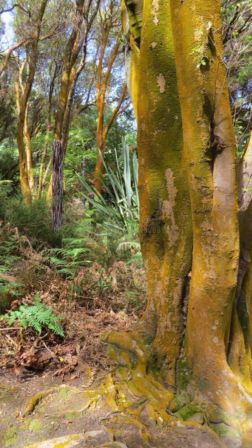 Orange Tree in New Zealand stock photos