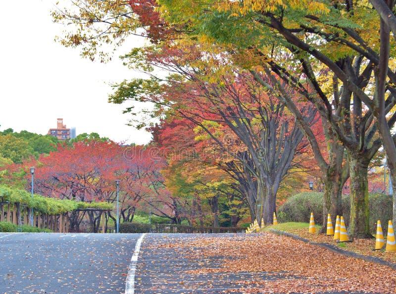 Walk way in Autumn at Nagoya, Japan. stock image