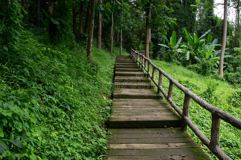 Download Walk way in the forest stock photo. Image of humidity - 26202448