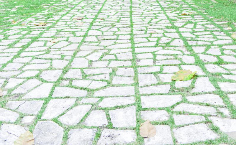 Walk way path with a grass random. Jogging track royalty free stock images