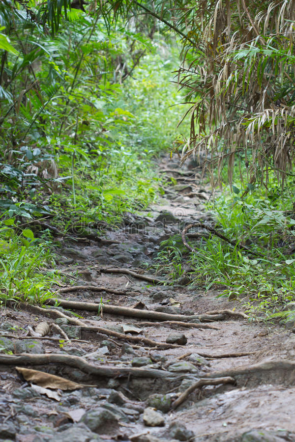 Download Walk on the wild stock photo. Image of footpath, flora - 28004584