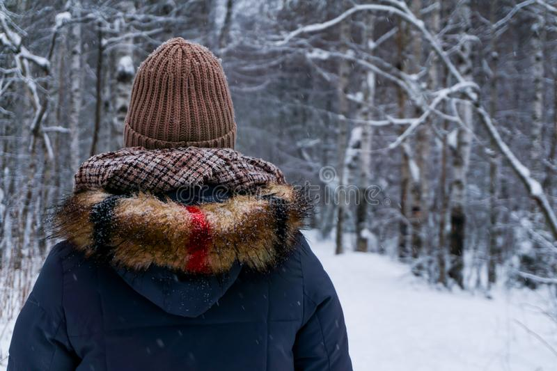 Walk in the winter forest royalty free stock photo