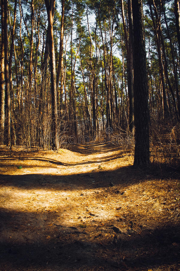 A walk in the woods royalty free stock image