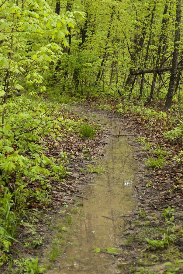 Walk through the woods royalty free stock photo