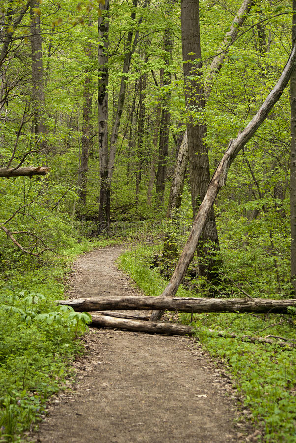 Walk through the woods royalty free stock photography