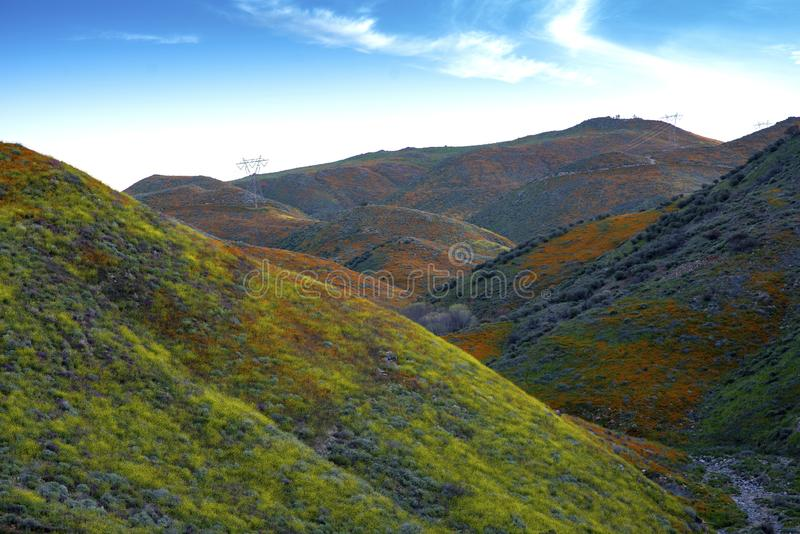 Walker Canyon. Lake Elsinore Super Bloom Poppies 2019 royalty free stock photography