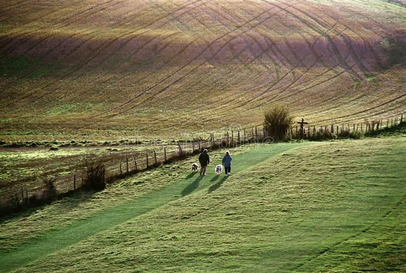 Walkers with dogs. The ridgeway path. pitstone hill. the chilterns. buckinghamshire royalty free stock photo