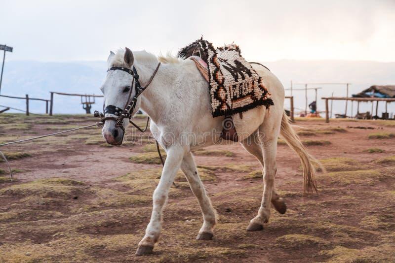 Walkes de un caballo blanco a través de un campo foto de archivo