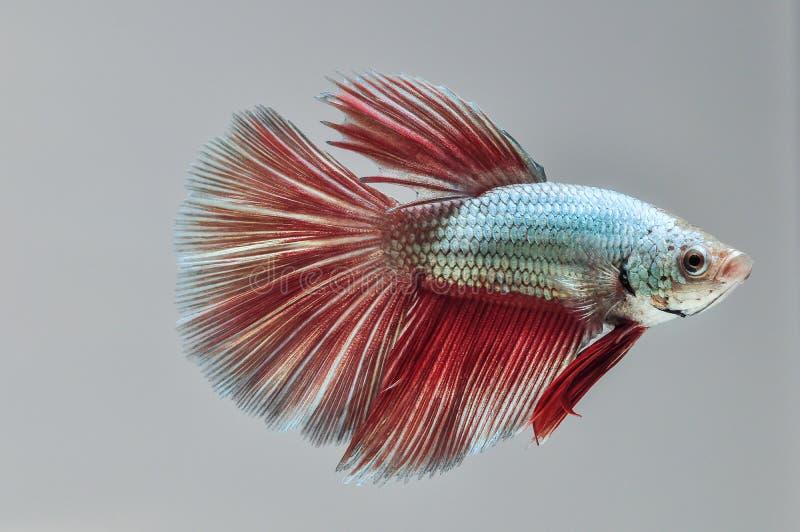 WALKI ryba zdjęcie royalty free