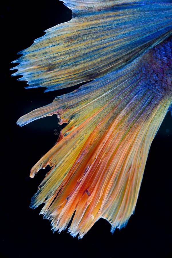 WALKI ryba zdjęcie stock