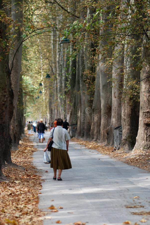 Download Walking stock photo. Image of walking, park, nature, avenue - 3092426