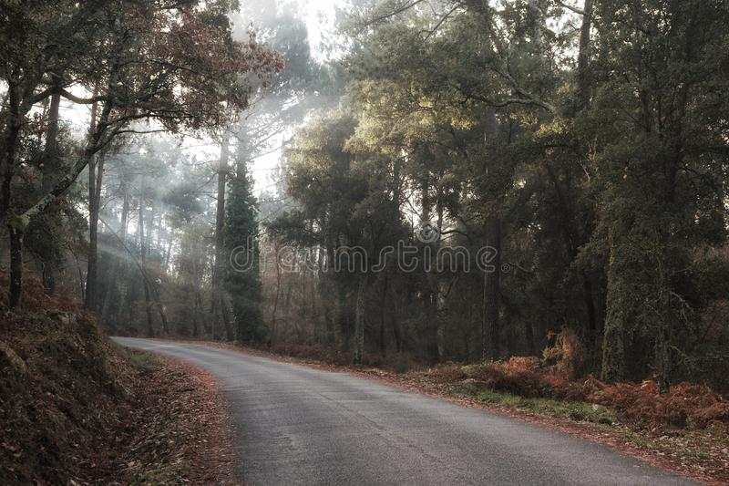 An afternoon foggy road. Walking along a foggy road on a afternoon royalty free stock images