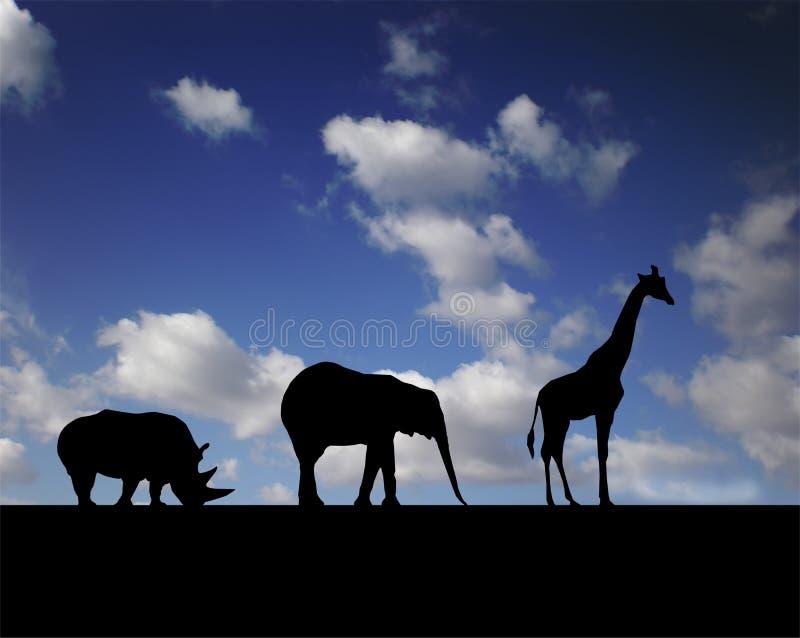 Walking animals stock photo