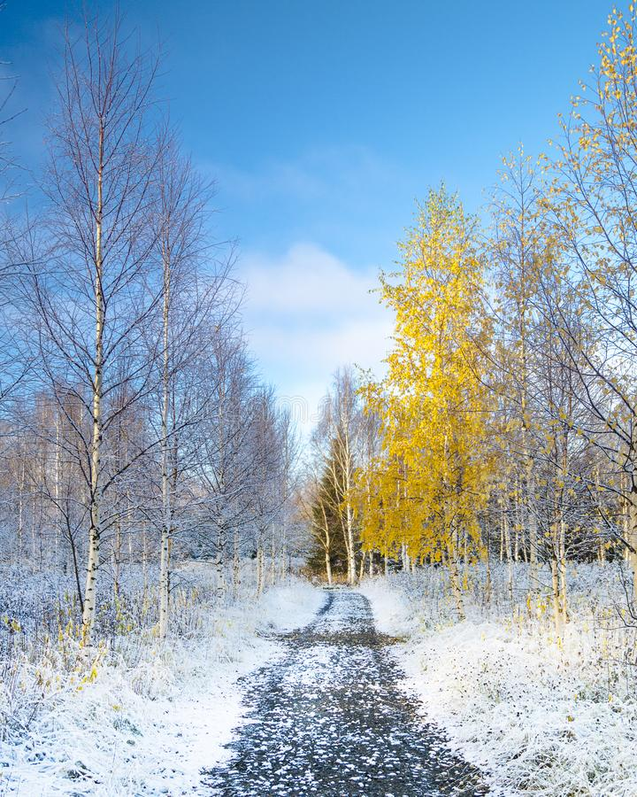 Walking around in Finnish lapland. Visiting Finnish lapland on the first snowing day of the year royalty free stock image
