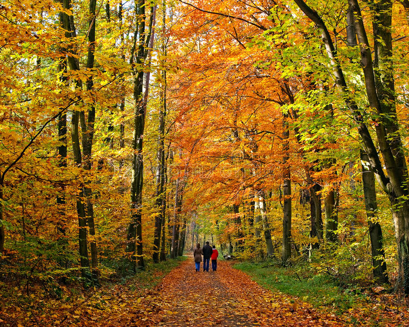 Download Walking Through Autumn Park Stock Image - Image: 10422933
