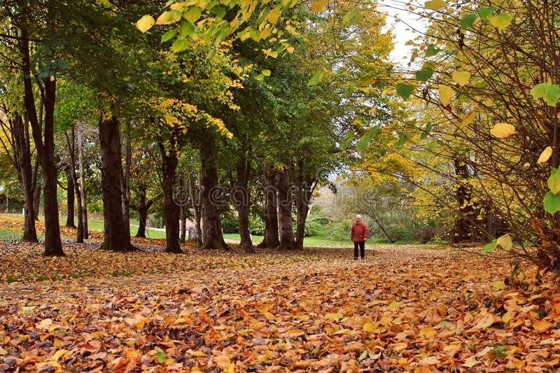 Walking in Autumn Wood royalty free stock photos