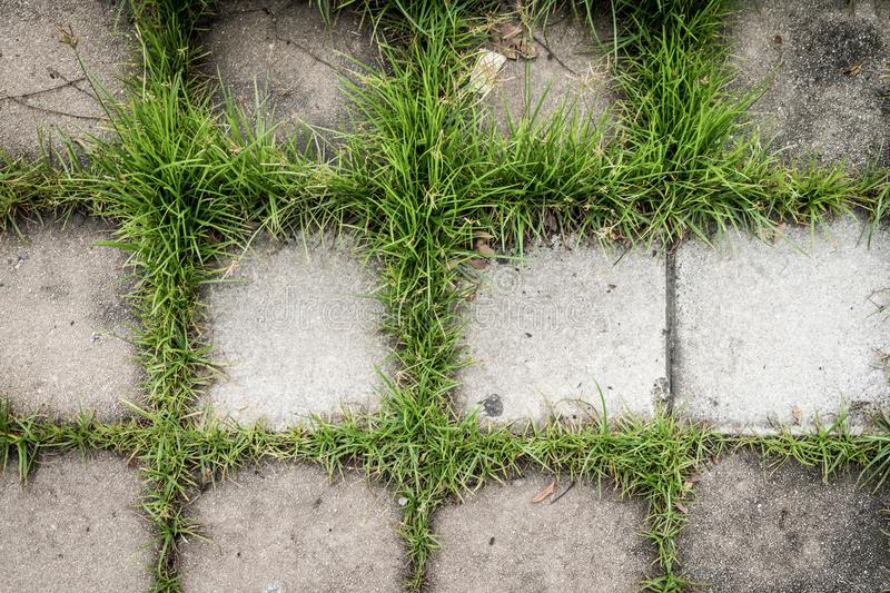 Concrete block with green grass for texture background royalty free stock image