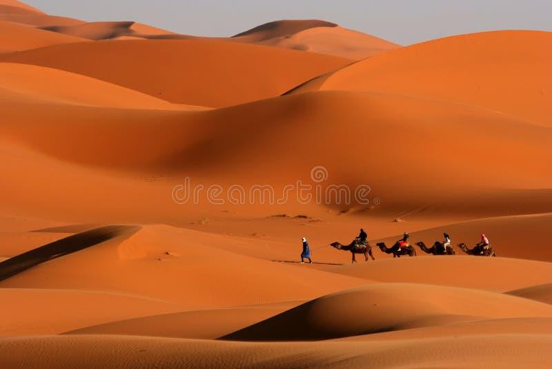 Walking in the desert. Cammel Caravan on Africa´s desert