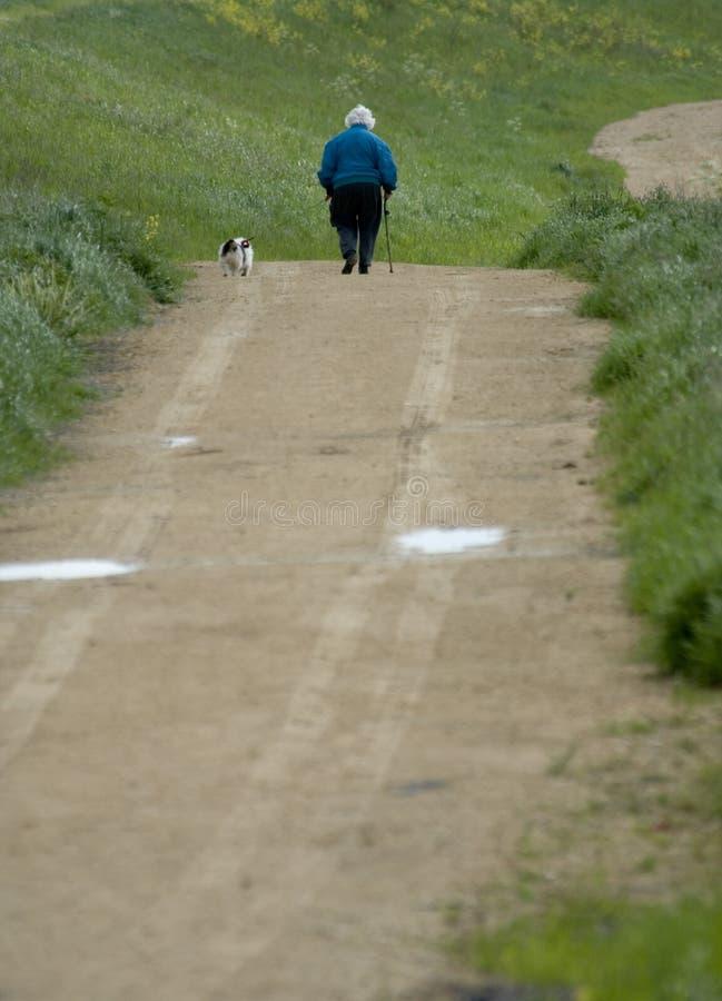 Download Walking the dog stock photo. Image of pensioner, elderly - 889614