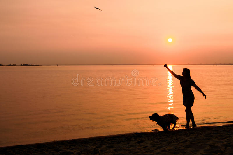Walking the dog along the beach royalty free stock photo