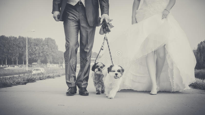 Walking with dog on the morning of the wedding day stock photos