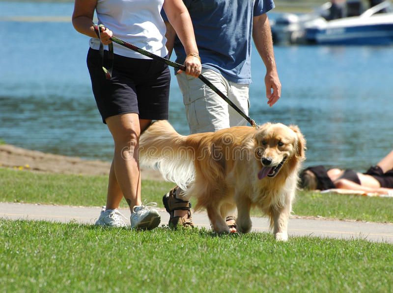 Walking the dog in the park stock photography