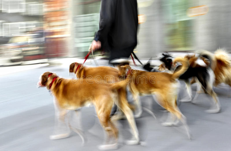 Walking the dog on the street royalty free stock photos