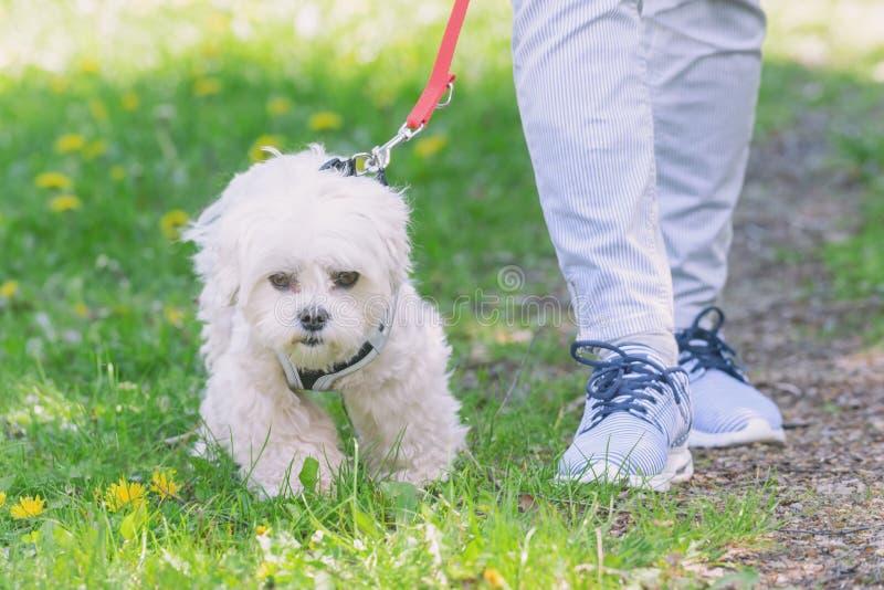 Walking with dog stock photos