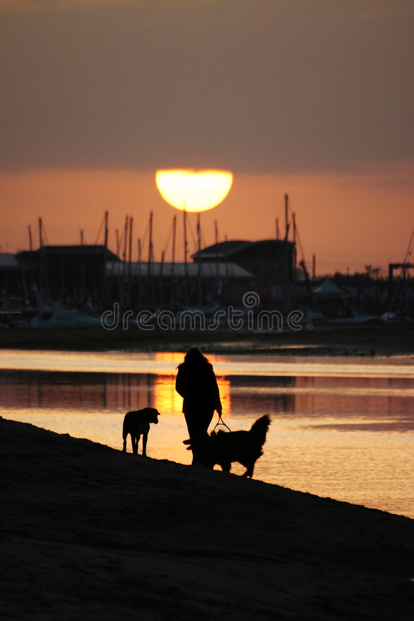 Download Walking Dogs On A Beach Stock Image - Image: 1963401