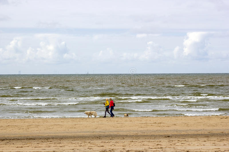 Walking with dogs on the beach in the Netherlands royalty free stock photos